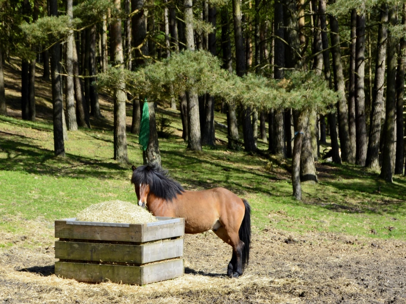 Hest - Peterslyst Ridecenter